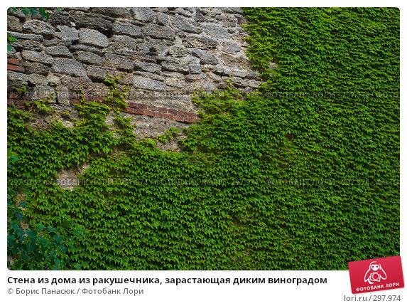 Стена из дома из ракушечника, зарастающая диким виноградом, фото № 297974, снято 23 мая 2008 г. (c) Борис Панасюк / Фотобанк Лори