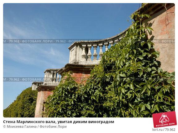 Стена Марлинского вала, увитая диким виноградом, фото № 79962, снято 23 июня 2007 г. (c) Моисеева Галина / Фотобанк Лори