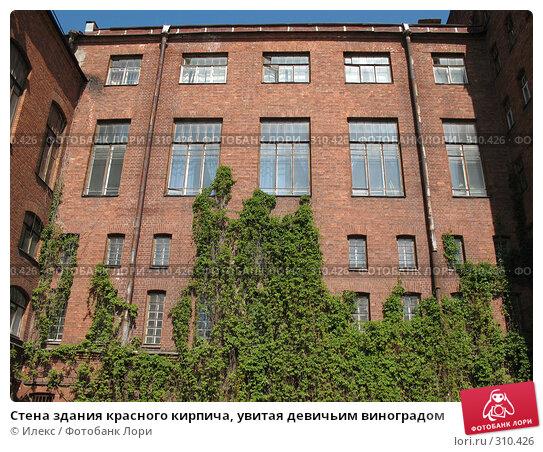 Стена здания красного кирпича, увитая девичьим виноградом, фото № 310426, снято 28 мая 2008 г. (c) Морковкин Терентий / Фотобанк Лори