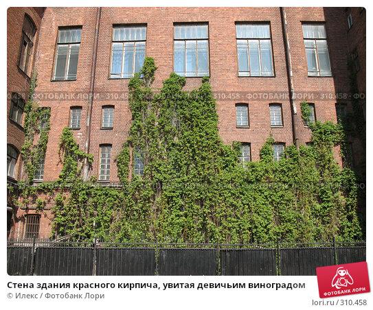 Стена здания красного кирпича, увитая девичьим виноградом, фото № 310458, снято 28 мая 2008 г. (c) Морковкин Терентий / Фотобанк Лори