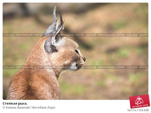 Степная рысь, фото № 123638, снято 20 апреля 2007 г. (c) Коваль Василий / Фотобанк Лори