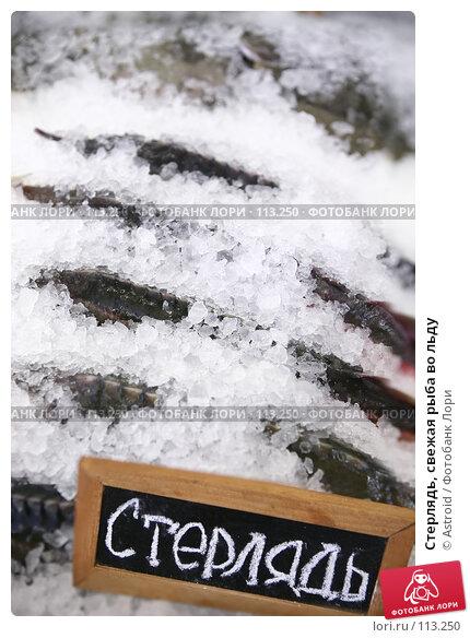 Стерлядь, свежая рыба во льду, фото № 113250, снято 25 сентября 2007 г. (c) Astroid / Фотобанк Лори