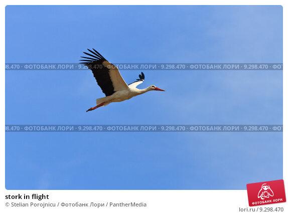 Купить «stork in flight», фото № 9298470, снято 21 февраля 2019 г. (c) PantherMedia / Фотобанк Лори