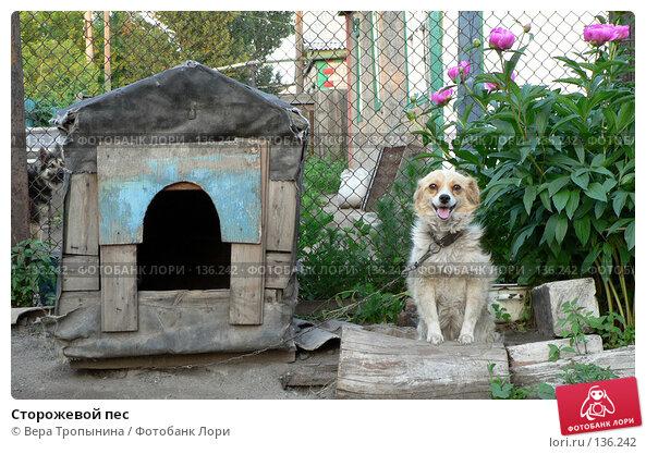 Купить «Сторожевой пес», фото № 136242, снято 23 апреля 2018 г. (c) Вера Тропынина / Фотобанк Лори