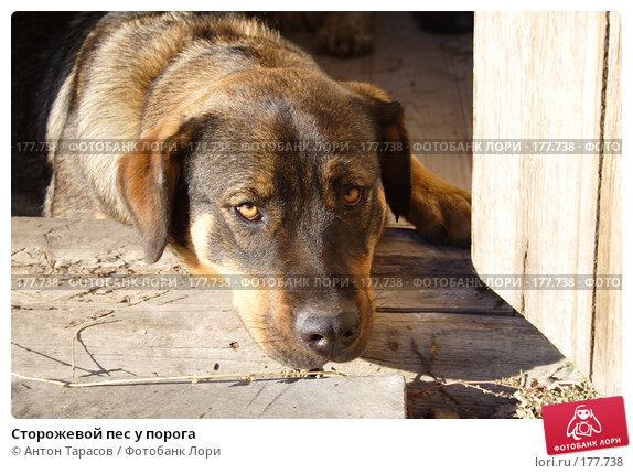 Купить «Сторожевой пес у порога», фото № 177738, снято 20 апреля 2018 г. (c) Антон Тарасов / Фотобанк Лори
