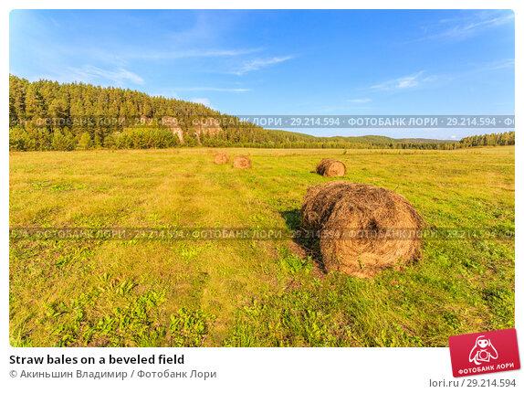 Купить «Straw bales on a beveled field», фото № 29214594, снято 8 сентября 2017 г. (c) Акиньшин Владимир / Фотобанк Лори