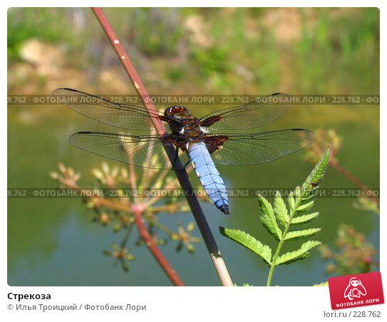 Стрекоза, фото № 228762, снято 16 июля 2007 г. (c) Илья Троицкий / Фотобанк Лори