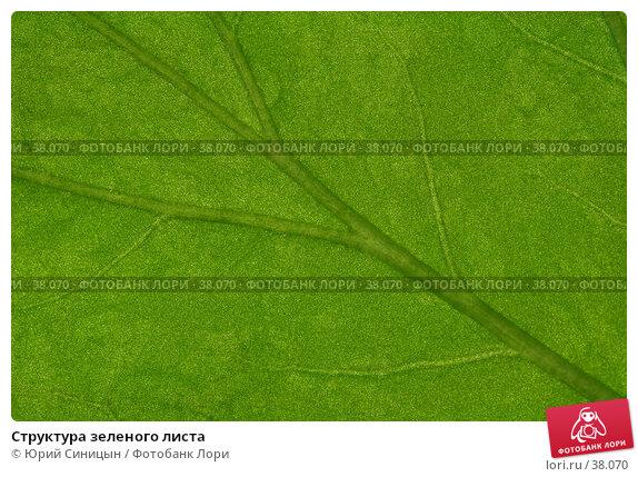 Структура зеленого листа, фото № 38070, снято 18 февраля 2007 г. (c) Юрий Синицын / Фотобанк Лори