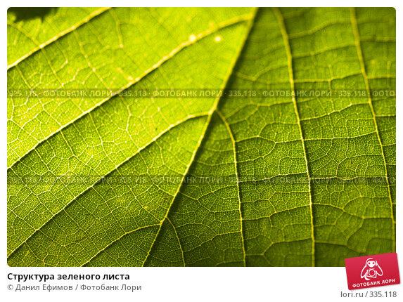 Структура зеленого листа, фото № 335118, снято 19 июня 2008 г. (c) Данил Ефимов / Фотобанк Лори