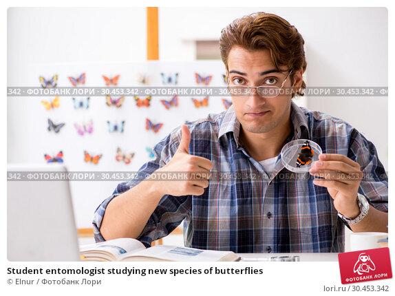 Student entomologist studying new species of butterflies. Стоковое фото, фотограф Elnur / Фотобанк Лори