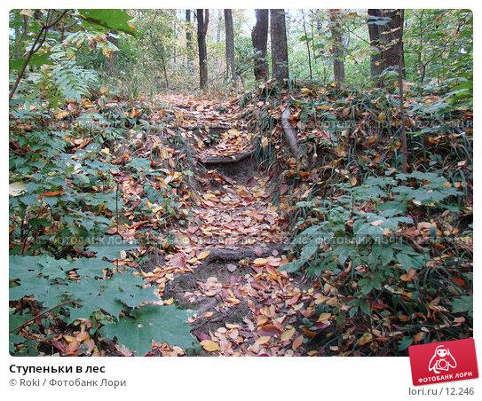 Ступеньки в лес, фото № 12246, снято 28 сентября 2006 г. (c) Roki / Фотобанк Лори