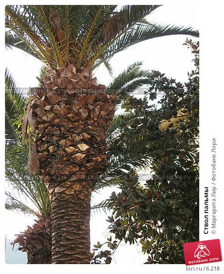Ствол пальмы, фото № 6218, снято 29 мая 2017 г. (c) Маргарита Лир / Фотобанк Лори