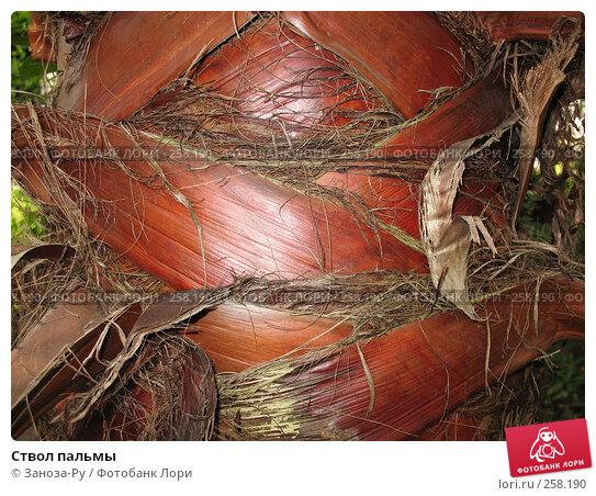 Купить «Ствол пальмы», фото № 258190, снято 12 апреля 2008 г. (c) Заноза-Ру / Фотобанк Лори