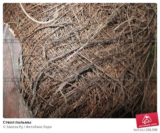 Ствол пальмы, фото № 258598, снято 12 апреля 2008 г. (c) Заноза-Ру / Фотобанк Лори