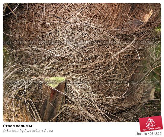 Ствол пальмы, фото № 261522, снято 12 апреля 2008 г. (c) Заноза-Ру / Фотобанк Лори