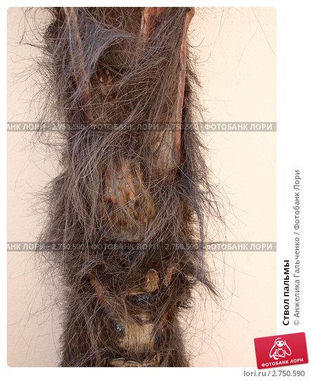 Ствол пальмы. Стоковое фото, фотограф Анжелика Гальченко / Фотобанк Лори