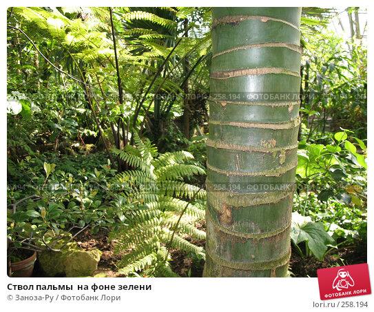 Ствол пальмы  на фоне зелени, фото № 258194, снято 12 апреля 2008 г. (c) Заноза-Ру / Фотобанк Лори