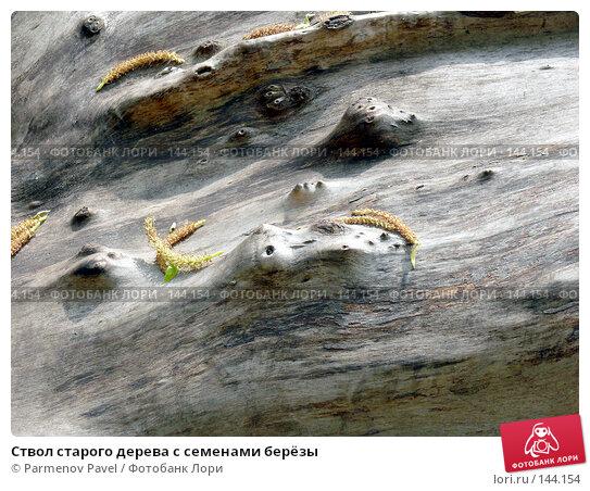 Ствол старого дерева с семенами берёзы, фото № 144154, снято 17 мая 2007 г. (c) Parmenov Pavel / Фотобанк Лори