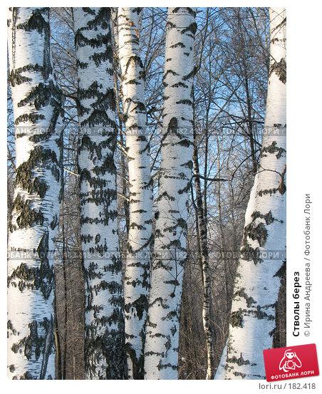 Стволы берез, фото № 182418, снято 20 января 2008 г. (c) Ирина Андреева / Фотобанк Лори