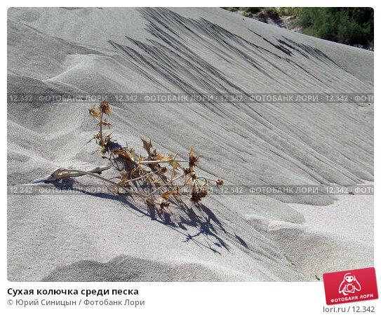 Сухая колючка среди песка, фото № 12342, снято 27 сентября 2006 г. (c) Юрий Синицын / Фотобанк Лори