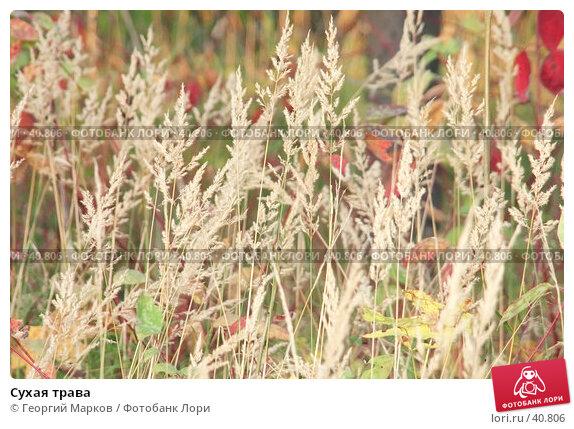 Сухая трава, фото № 40806, снято 8 октября 2005 г. (c) Георгий Марков / Фотобанк Лори