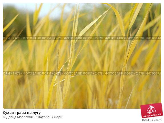 Купить «Сухая трава на лугу», фото № 2678, снято 14 октября 2004 г. (c) Давид Мзареулян / Фотобанк Лори