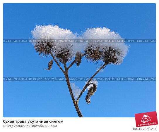 Купить «Сухая трава укутанная снегом», фото № 130214, снято 18 декабря 2005 г. (c) Serg Zastavkin / Фотобанк Лори