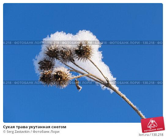 Сухая трава укутанная снегом, фото № 130218, снято 18 декабря 2005 г. (c) Serg Zastavkin / Фотобанк Лори