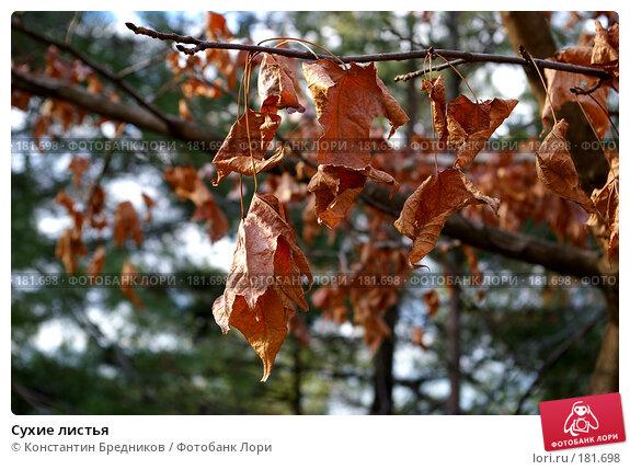 Сухие листья, фото № 181698, снято 6 ноября 2006 г. (c) Константин Бредников / Фотобанк Лори