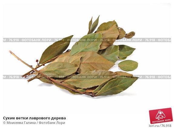 Сухие ветки лаврового дерева, фото № 76918, снято 13 мая 2007 г. (c) Моисеева Галина / Фотобанк Лори