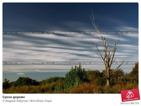 Сухое дерево, фото № 94110, снято 11 сентября 2007 г. (c) Андрей Лабутин / Фотобанк Лори