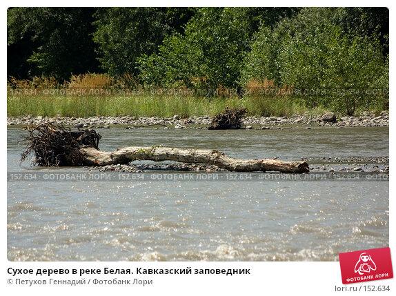 Купить «Сухое дерево в реке Белая. Кавказский заповедник», фото № 152634, снято 10 августа 2007 г. (c) Петухов Геннадий / Фотобанк Лори