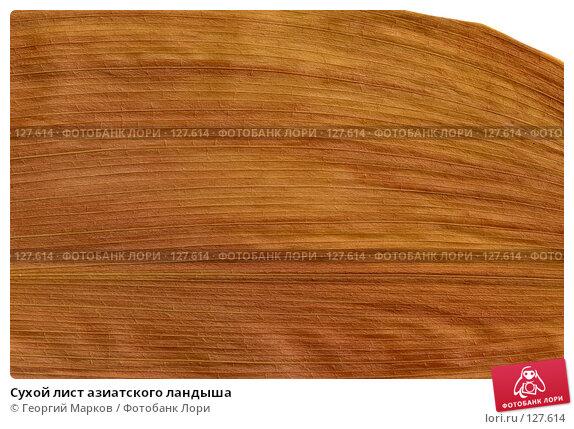 Сухой лист азиатского ландыша, фото № 127614, снято 23 апреля 2017 г. (c) Георгий Марков / Фотобанк Лори