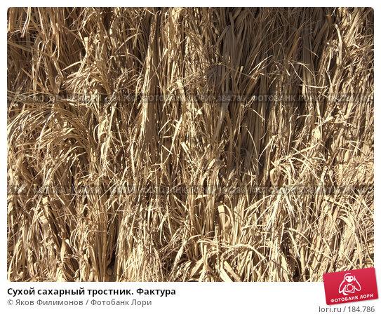 Сухой сахарный тростник. Фактура, фото № 184786, снято 13 января 2008 г. (c) Яков Филимонов / Фотобанк Лори