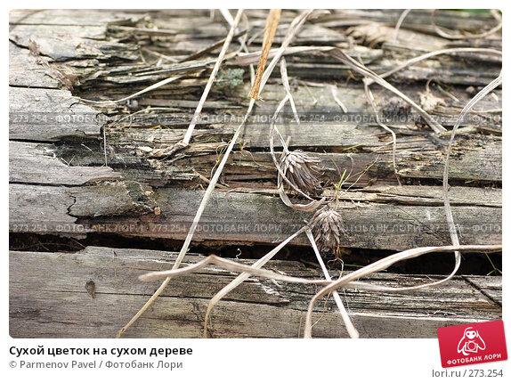 Сухой цветок на сухом дереве, фото № 273254, снято 2 мая 2008 г. (c) Parmenov Pavel / Фотобанк Лори