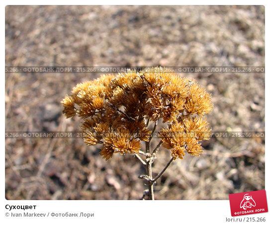 Купить «Сухоцвет», фото № 215266, снято 12 апреля 2007 г. (c) Ivan Markeev / Фотобанк Лори