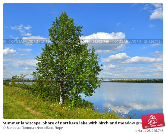 Купить «Summer landscape. Shore of northern lake with birch and meadow grasses», фото № 28926746, снято 13 июля 2018 г. (c) Валерия Попова / Фотобанк Лори