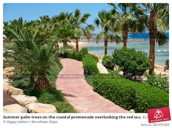 Купить «Summer palm trees on the coastal promenade overlooking the red sea, travel concept in Egypt, Sharm El Sheikh», фото № 28419502, снято 15 апреля 2018 г. (c) Happy Letters / Фотобанк Лори
