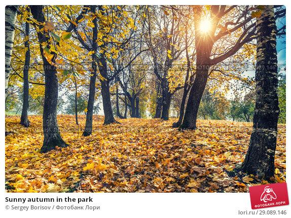 Купить «Sunny autumn in the park», фото № 29089146, снято 5 октября 2016 г. (c) Sergey Borisov / Фотобанк Лори