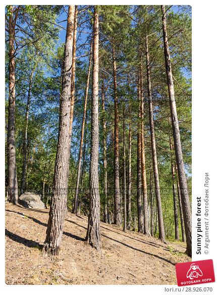 Купить «Sunny pine forest», фото № 28926070, снято 18 июля 2018 г. (c) Argument / Фотобанк Лори