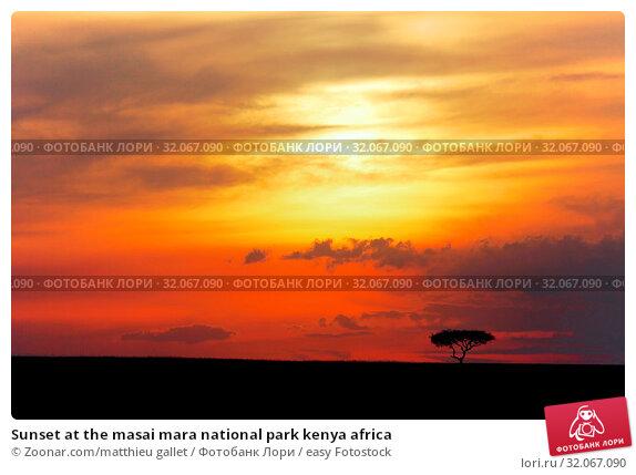 Sunset at the masai mara national park kenya africa. Стоковое фото, фотограф Zoonar.com/matthieu gallet / easy Fotostock / Фотобанк Лори