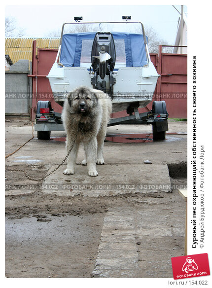 Купить «Суровый пес охраняющий собственность своего хозяина», фото № 154022, снято 16 апреля 2006 г. (c) Андрей Бурдюков / Фотобанк Лори