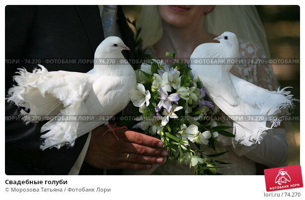 Свадебные голуби, фото № 74270, снято 18 августа 2007 г. (c) Морозова Татьяна / Фотобанк Лори