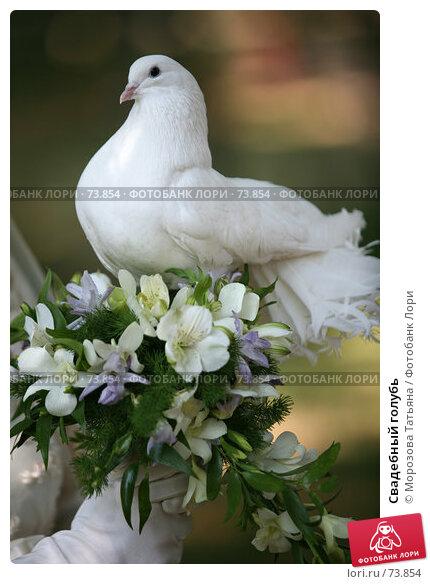 Свадебный голубь, фото № 73854, снято 18 августа 2007 г. (c) Морозова Татьяна / Фотобанк Лори