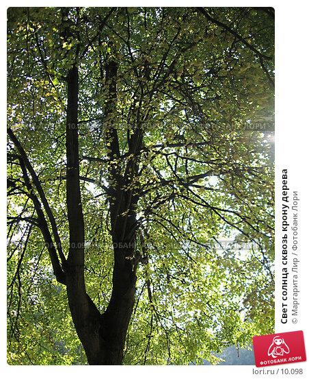 Свет солнца сквозь крону дерева, фото № 10098, снято 24 сентября 2006 г. (c) Маргарита Лир / Фотобанк Лори