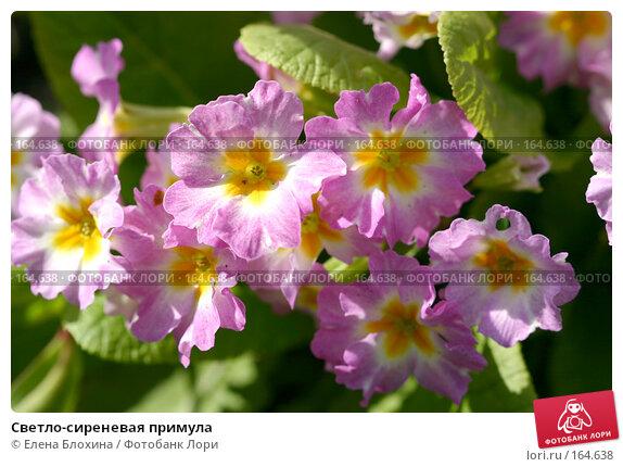 Светло-сиреневая примула, фото № 164638, снято 14 мая 2007 г. (c) Елена Блохина / Фотобанк Лори