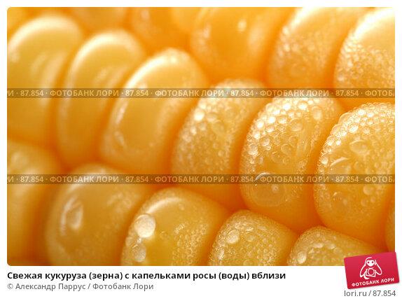 Свежая кукуруза (зерна) с капельками росы (воды) вблизи, фото № 87854, снято 18 сентября 2007 г. (c) Александр Паррус / Фотобанк Лори