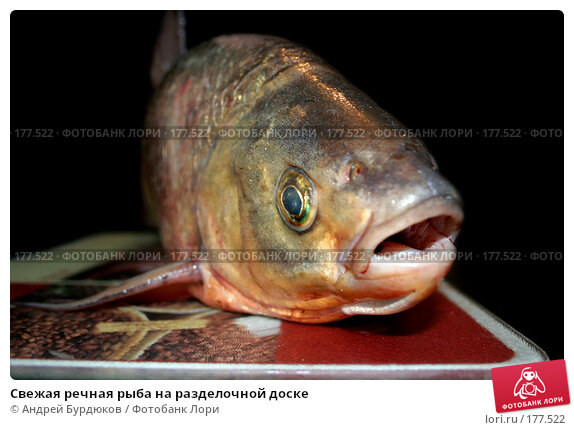 Свежая речная рыба на разделочной доске, фото № 177522, снято 6 мая 2007 г. (c) Андрей Бурдюков / Фотобанк Лори