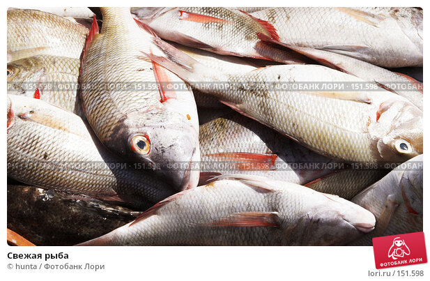 Свежая рыба, фото № 151598, снято 15 сентября 2007 г. (c) hunta / Фотобанк Лори
