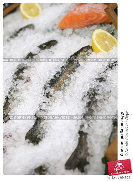 Свежая рыба во льду, фото № 99502, снято 25 сентября 2007 г. (c) Astroid / Фотобанк Лори